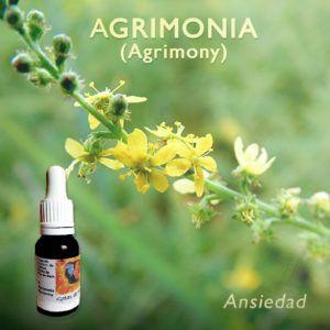 Flores de Bach: Agrimonia (Agrimony) Ansiedad