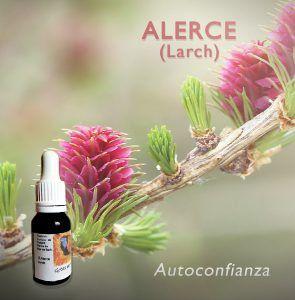 Flores de Bach: Alerce (Larch) - Autoconfianza
