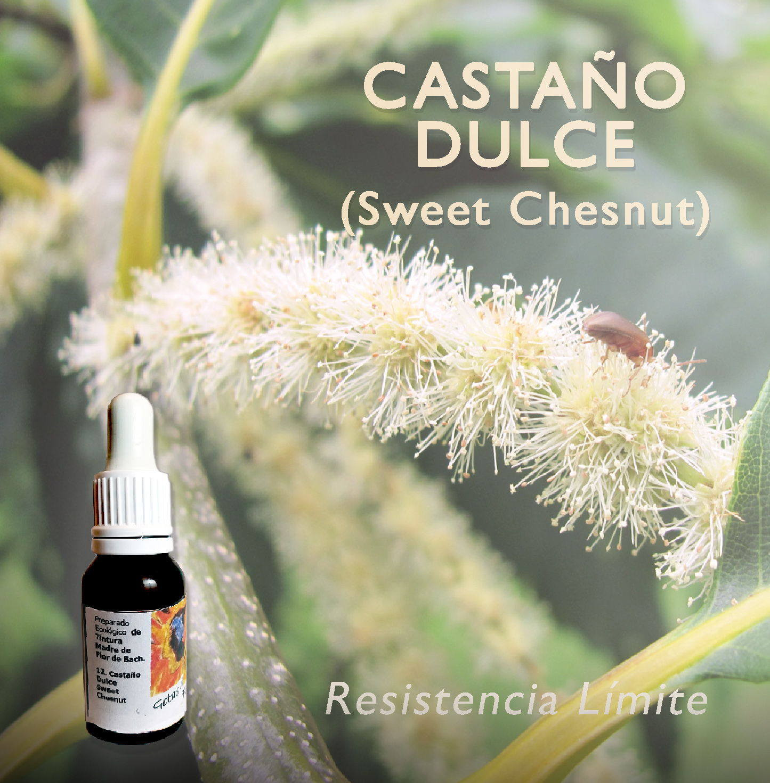 Flores de Bach: Castaño Dulce (Sweet Chesnut) - Resistencia Límite