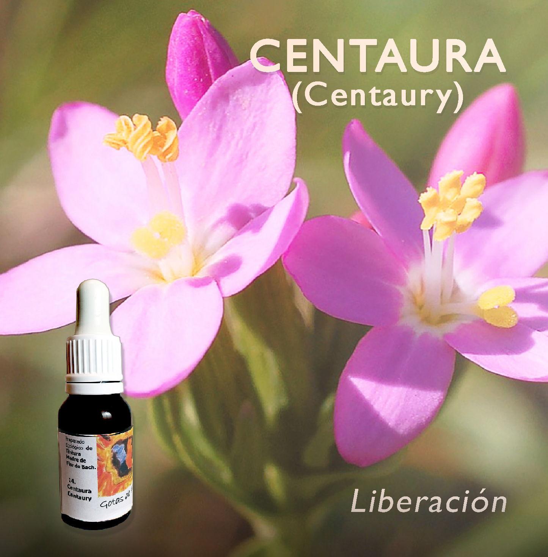 Flores de Bach: Centaura (Centaury) - Liberación