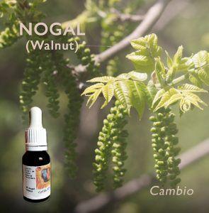 Flores de Bach: Nogal (Walnut) - Cambio