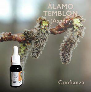 Flores de Bach: Alamo Temblon (Aspen) Confianza