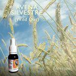 Flores de Bach: Avena Silvestre (Wild Oat)