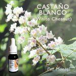 Flores de Bach: Castaño Blanco (White Chesnut) - Paz Mental