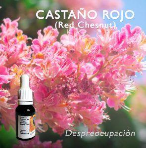 Flores de Bach: Castaño Rojo (Red Chesnut)