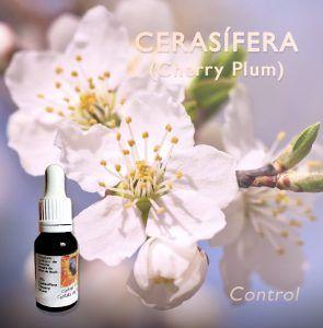 Flores de Bach: Cerasífera (Cherry Plum) - Control