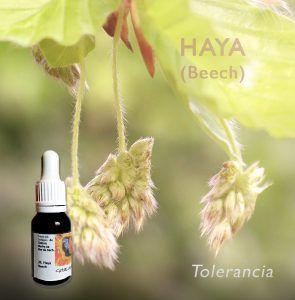 Flores de Bach: Haya (Beech) - Tolerancia