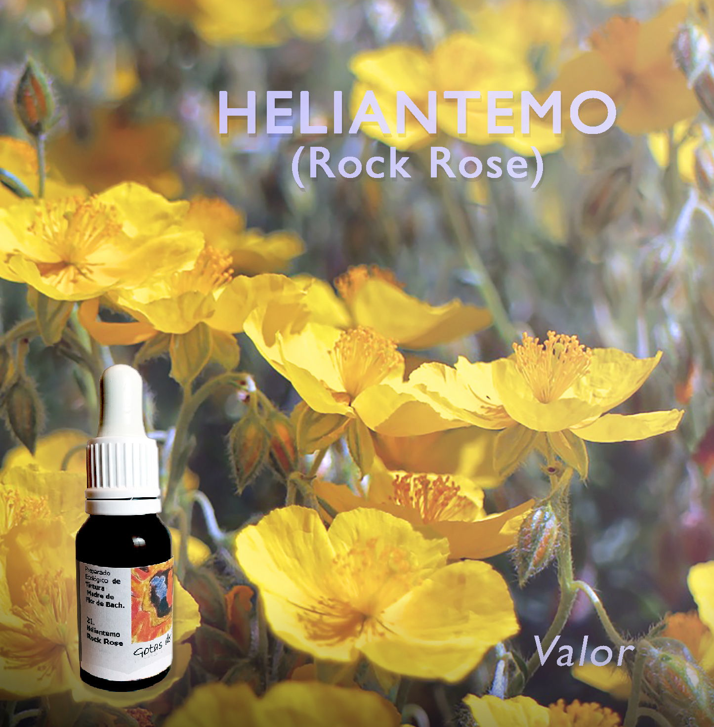 Flores de Bach: Heliantemo (Rock Rose) - Valor