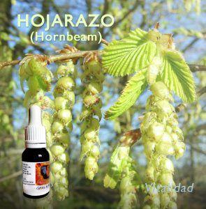 Flores de Bach: Hojarazo (Hornbeam)