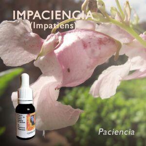 Flores de Bach: Impaciencia (Impatiens) - Paciencia