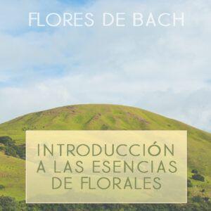 Introducción a las esencias florales
