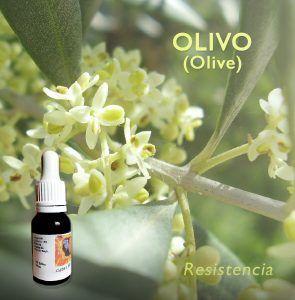 Flores de Bach: Olivo (Olive) - Resistencia