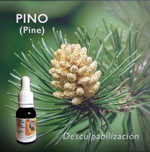 Flores de Bach: Pino (Pine) - Desculpabilización