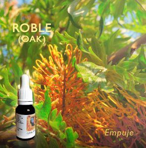 Flores de Bach: Roble (Oak) - Empuje
