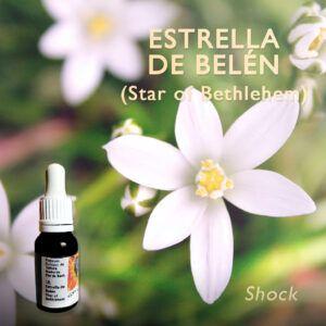 Flores de Bach: Estrella de Belen (Star of Bethlehem) - Shock