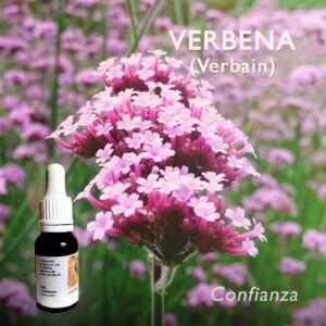 Flores de Bach: Verbena (Verbain) - Confianza