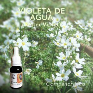 Flores de Bach: Violeta de Agua (Water Violet) - Compañerismo
