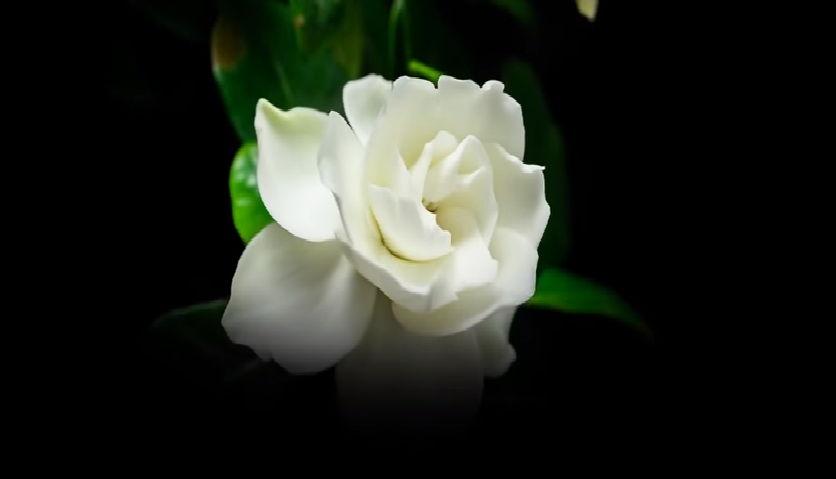 como funcionan las flores de bach para la ansiedad